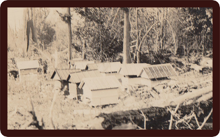 Columbia Apiaries located in Slocan in the 1940s and 1950s