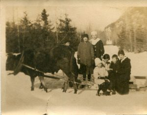 "Oxen named ""Charlie & Billy"" pulling a sleigh. Holt and Curtis family members standing and on the sleigh."